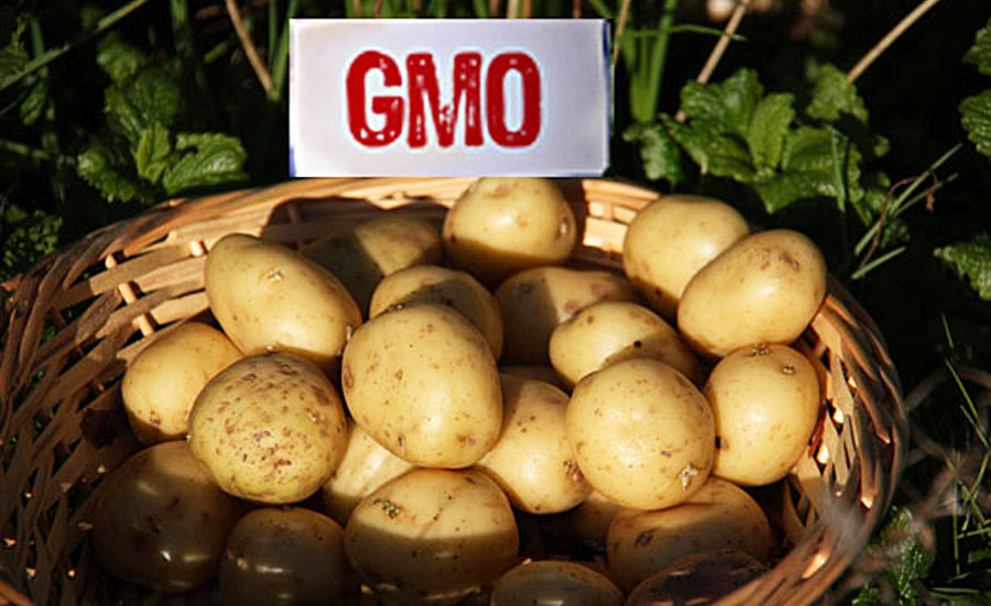 GMO: Frankenfood or Green Revolution?